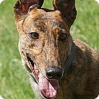 Adopt A Pet :: Jasmine - Portland, OR