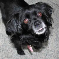 Adopt A Pet :: Dolly Jujing - Hanover, ON