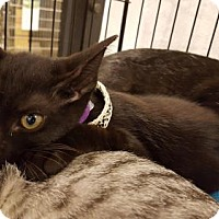 Adopt A Pet :: Kion - Orlando, FL
