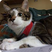 Adopt A Pet :: Vinnie - Manhattan, KS