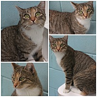 Adopt A Pet :: Buttercup - Forked River, NJ