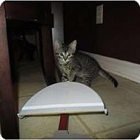 Adopt A Pet :: Juliet - Mobile, AL
