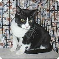 Adopt A Pet :: Greta - Colmar, PA