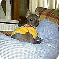Adopt A Pet :: Pepper - Glen Burnie, MD