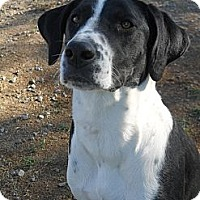 Adopt A Pet :: Joy #5209 - Jerome, ID