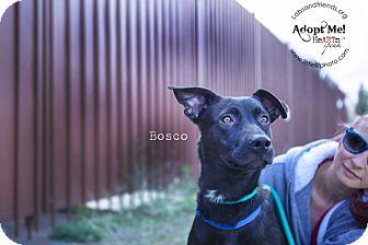 Labrador Retriever Mix Dog for adoption in Burbank, California - Bosco