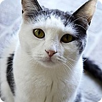 Adopt A Pet :: Kandy - Xenia, OH