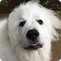 Adopt A Pet :: Bert ADOPTION PENDING - Bloomington, IL