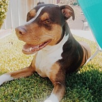 Adopt A Pet :: Wako - Orange, CA