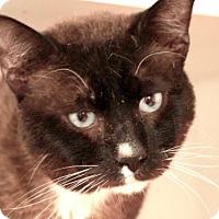 Adopt A Pet :: *RINGO - Camarillo, CA