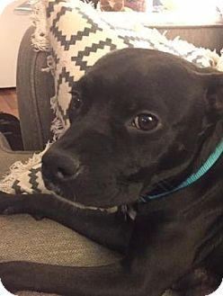 Boxer/Terrier (Unknown Type, Medium) Mix Dog for adoption in Mission, Kansas - Maude
