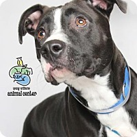 Adopt A Pet :: Roscoe - Knoxville, TN