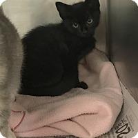 Adopt A Pet :: Summer - Newport, NC