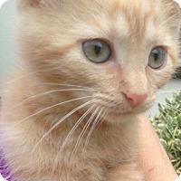 Adopt A Pet :: Mickey - Staten Island, NY
