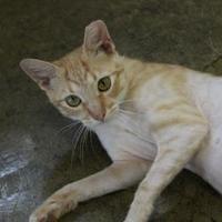 Adopt A Pet :: Elijah - Brunswick, GA
