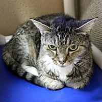 Adopt A Pet :: Clara - Germantown, TN