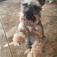 Adopt A Pet :: Junior - Springfield, MO