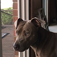 Adopt A Pet :: Lady, reduced fee! in DC Area! - Washington, DC