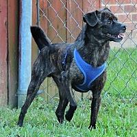Adopt A Pet :: Brownie - Killian, LA