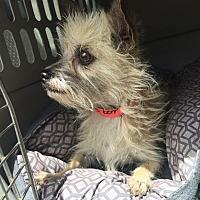 Adopt A Pet :: Fraggle - Phoenix, AZ