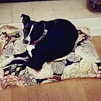 Adopt A Pet :: Magnolia - Little Rock, AR