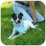 Photo 3 - Rat Terrier Dog for adoption in Portsmouth, Rhode Island - Jack