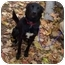 Photo 2 - Labrador Retriever/Spitz (Unknown Type, Medium) Mix Dog for adoption in McArthur, Ohio - MURPHY
