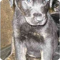 Adopt A Pet :: Maddy - Chandler, IN