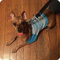 Adopt A Pet :: Deer - Syracuse, NY