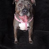 Adopt A Pet :: Nala - Van Nuys, CA