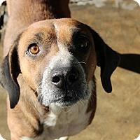 Adopt A Pet :: Katie - Pompton Lakes, NJ
