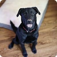 Adopt A Pet :: Mowgli - oklahoma city, OK