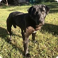 Adopt A Pet :: Benny - Spokane, WA