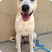 Adopt A Pet :: Casey - Arlington, VA
