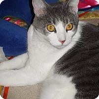 Adopt A Pet :: Lily Sarah [CP] - Oakland, CA