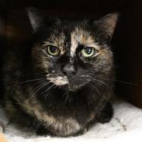 Adopt A Pet :: Ridley - Houghton, MI