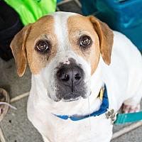 Adopt A Pet :: Sunny (Sunshine) - Richmond, VA