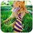 Photo 3 - Golden Retriever Mix Dog for adoption in Houston, Texas - Rocky