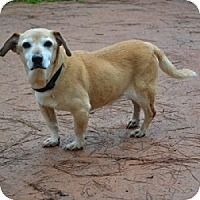 Adopt A Pet :: Bud - Athens, GA