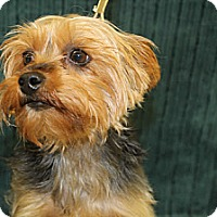Adopt A Pet :: Jamocha - Broomfield, CO
