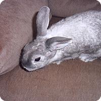 Adopt A Pet :: fancy - Maple Shade, NJ