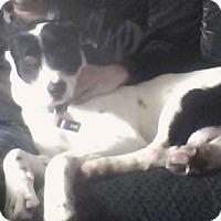 Adopt A Pet :: Bridger - Hamilton, ON