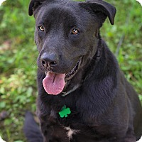 Adopt A Pet :: Joshua - Lewisville, IN