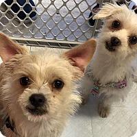 Adopt A Pet :: Hansel & Gretel - Los Angeles, CA