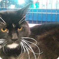 Adopt A Pet :: Smiley - Santa Monica, CA