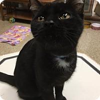 Adopt A Pet :: October - Medina, OH