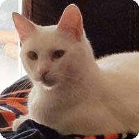 Adopt A Pet :: MrSpooky - North Highlands, CA