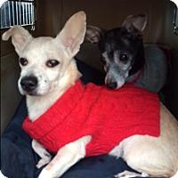 Adopt A Pet :: Latte - Creston, CA
