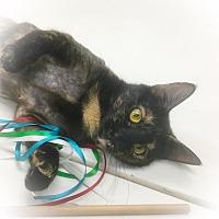 Adopt A Pet :: Taiwan - Webster, MA