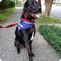 Adopt A Pet :: Newton - Raleigh, NC